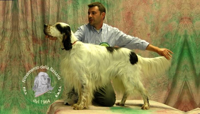 King della Bassana :: campione italiana bellezza internazionale