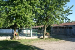 la struttura è dotata di 4 paddock ossia grandi box in parte coperti in parte aperti in cui i giovani soggetti possono crescere muovendosi liberamente ed in modo ideale