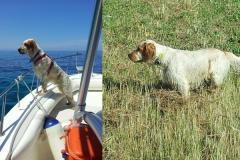Febo della Bassana :: in barca