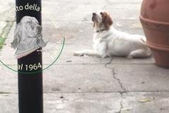 Livia della Bassana :: da Cremona (detta Rachel)