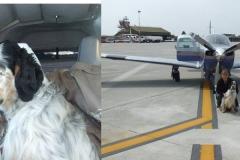 Simon della BAssana :: in Volo con l'aeri del prorpietario cacciatore